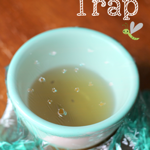 fruit fly trap made with small bowl and cellophane
