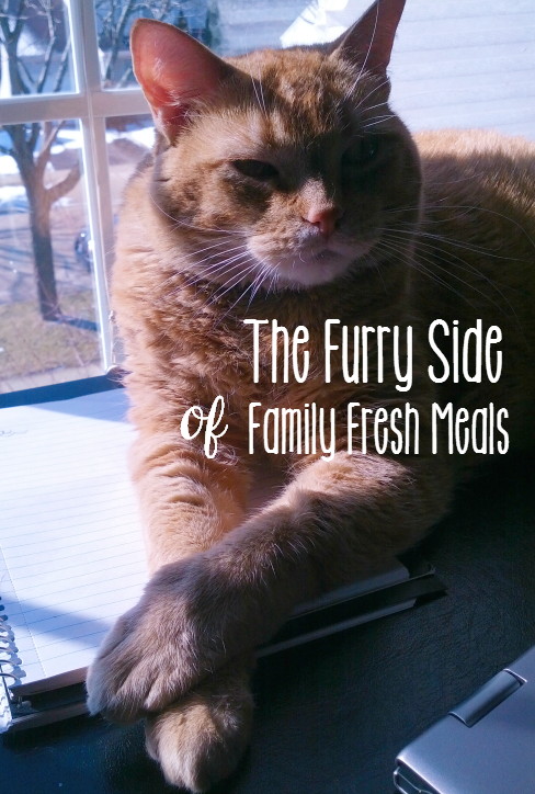 Sheba Cat Food review The Furry Side of Family Fresh Meals