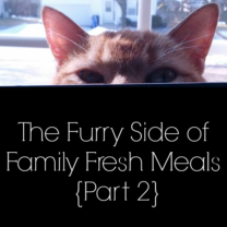 The Furry Side of Family Fresh Meals {Part 2} Sheba® Cat Food Review