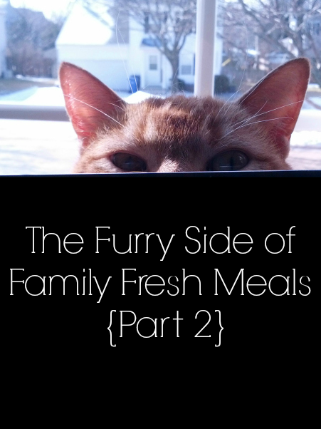 The Furry Side of Family Fresh Meals - part 2