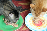 The Furry Side of Family Fresh Meals —– Part 3