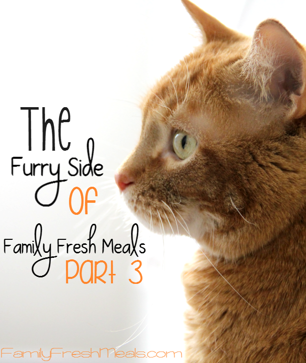 The Furry Side of Family Fresh Meals --Part 3